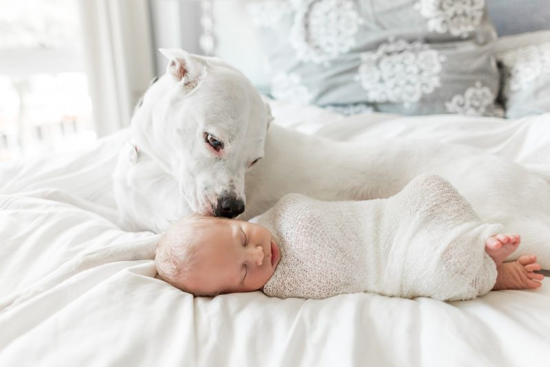 Little Man's Best Friend | Boston Lifestyle Newborn Photographer