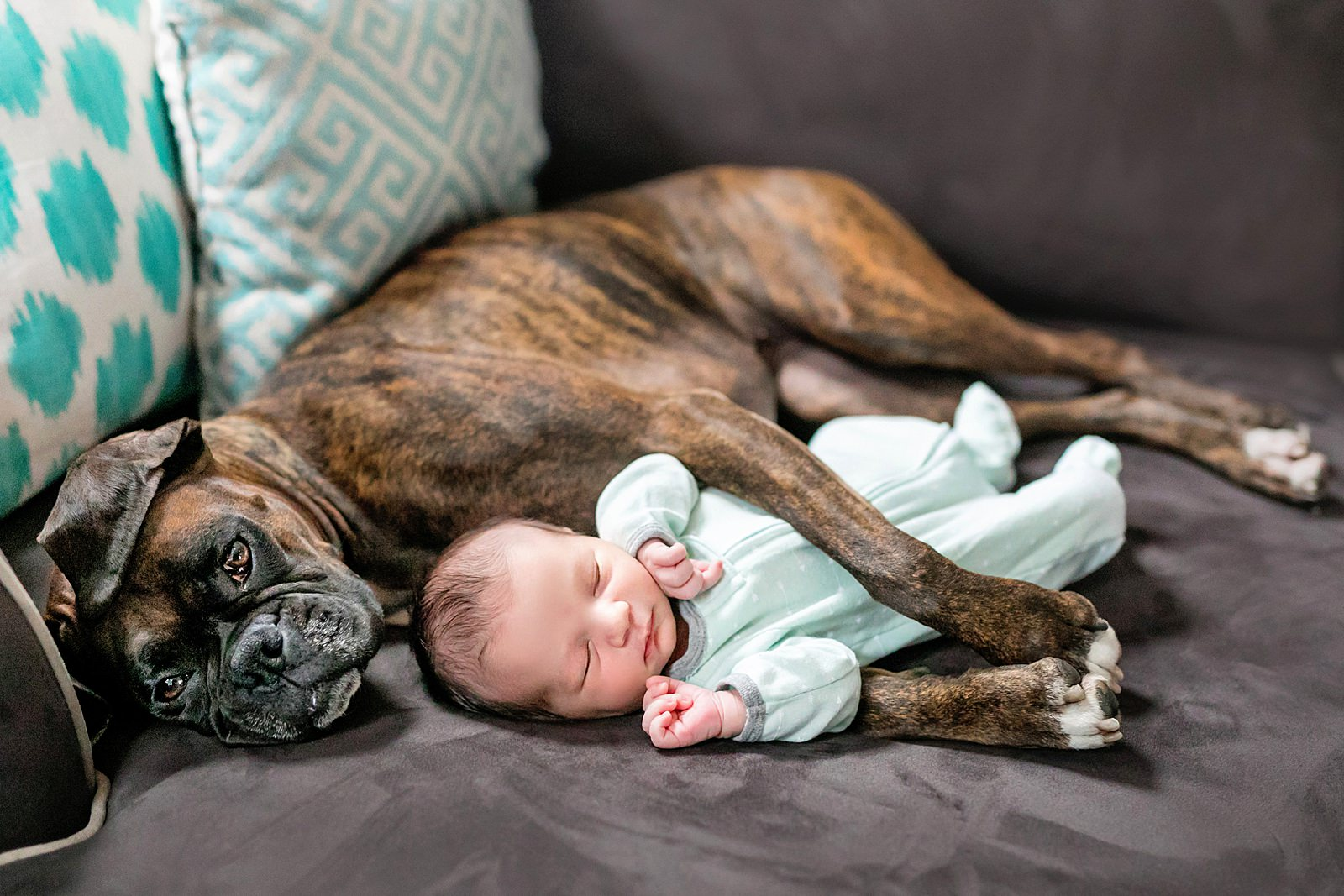dog and newborn photographed together
