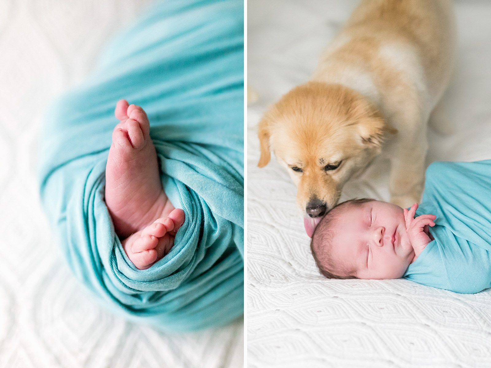 puppy licks newborn