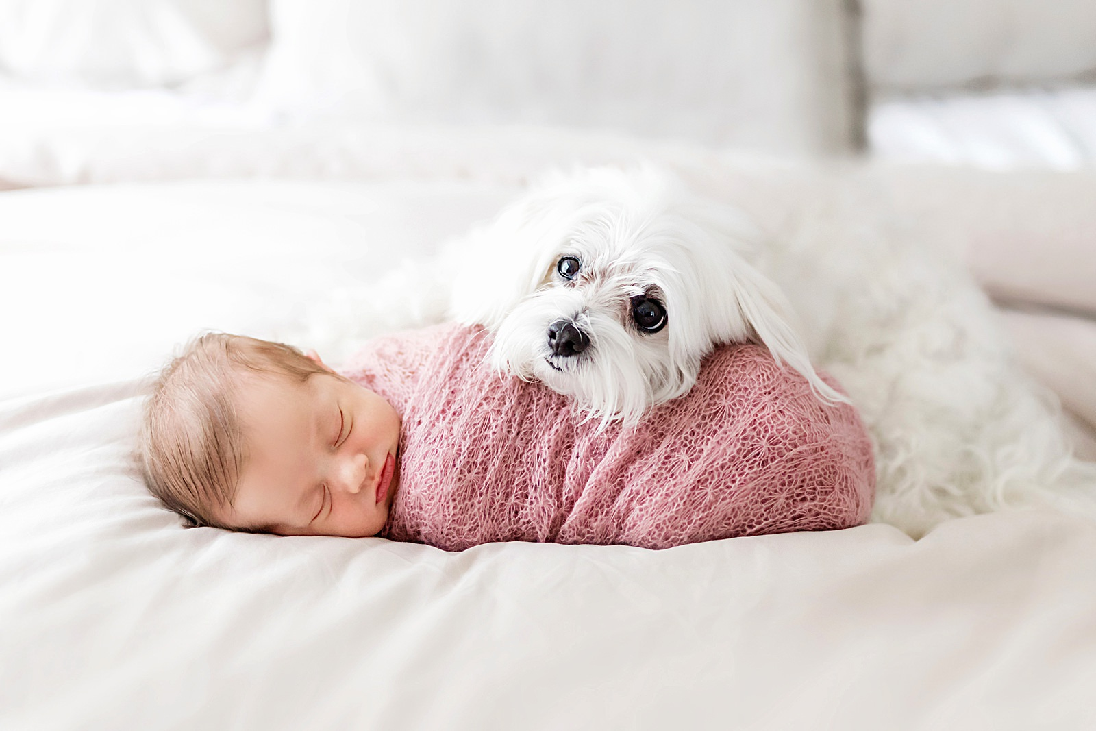 newborn and puppy photographer