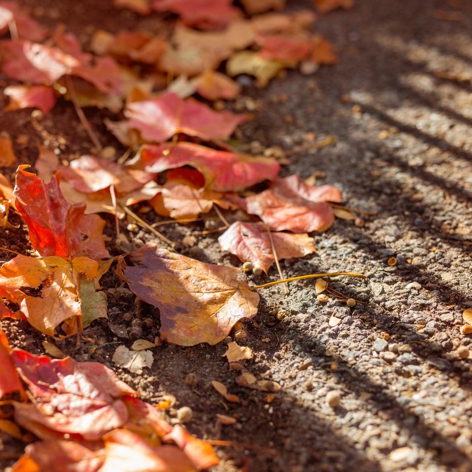fall_004
