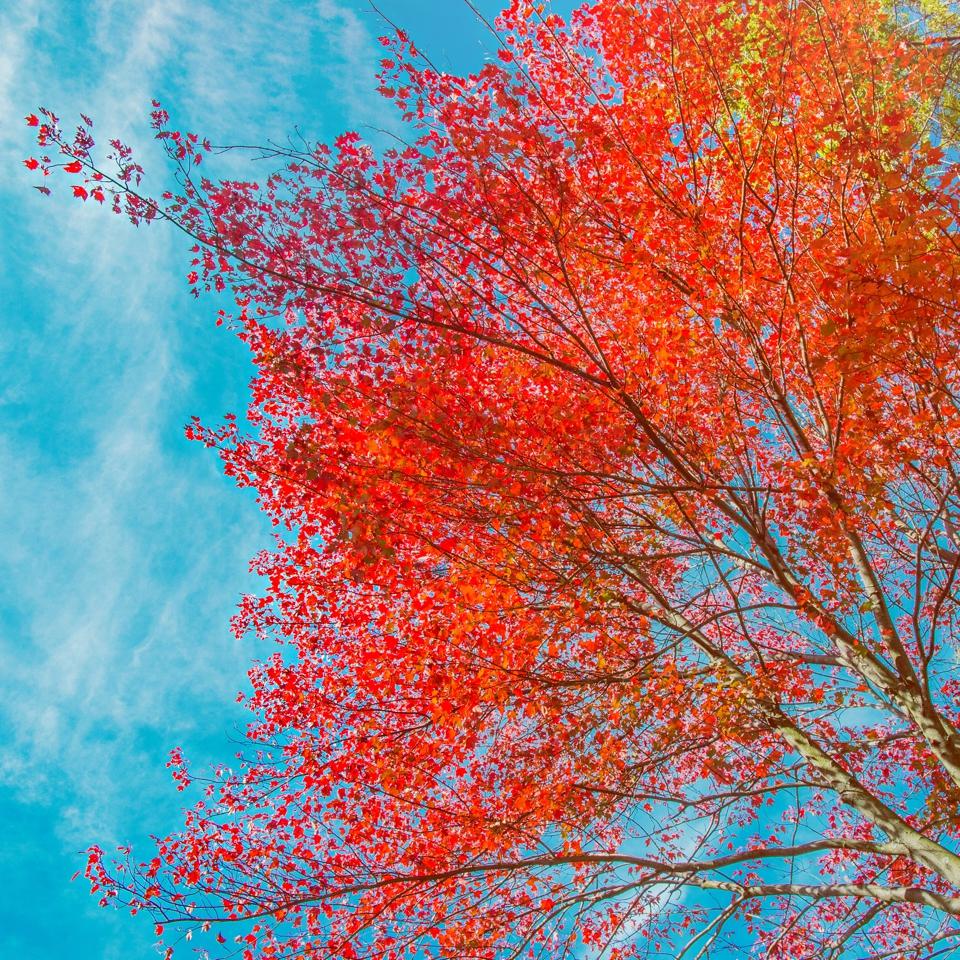 fall_005