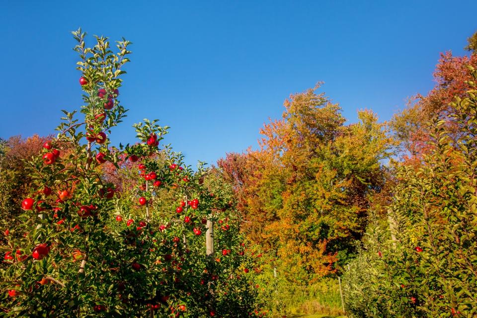 fall_006