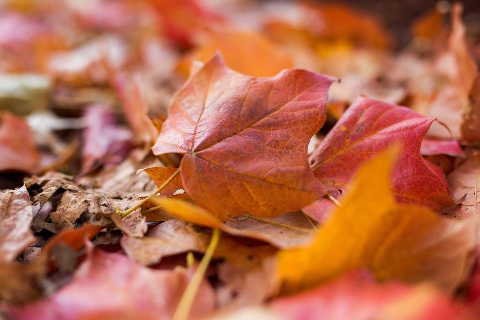 fall_014