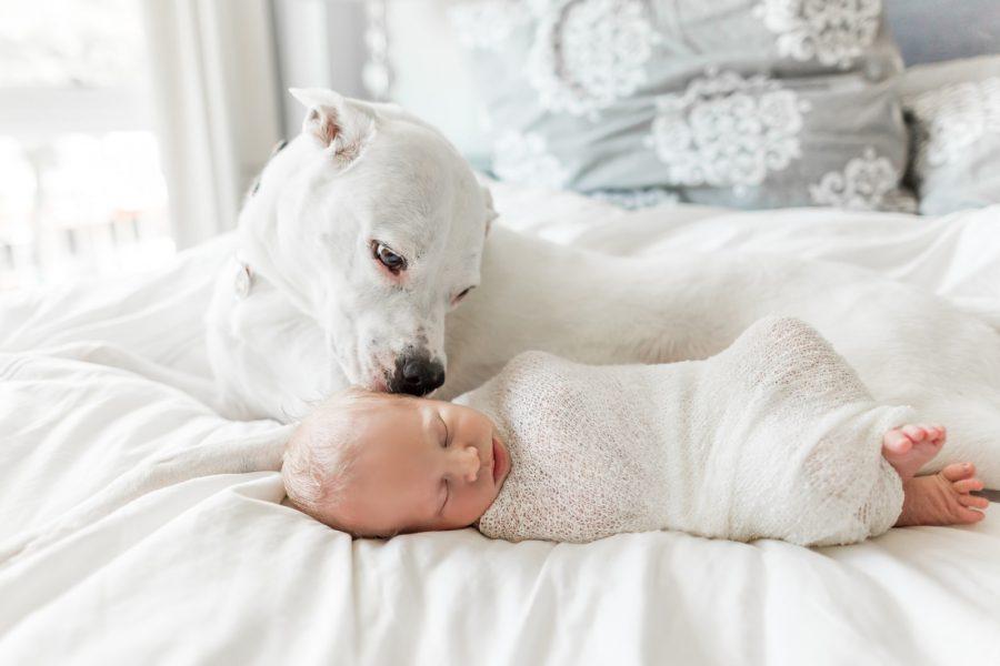 Little Man's Best Friend | Boston Lifestyle Newborn Photographer