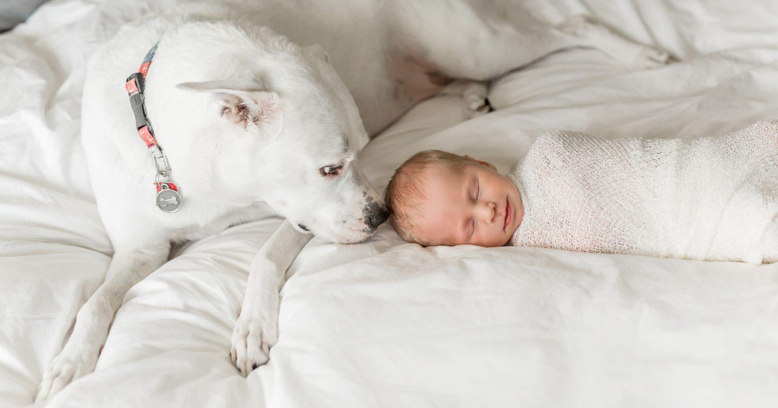 Little Man + His Furry Best Friend