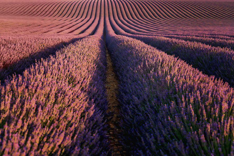 Provence, France: Part 3 [valensole lavender fields]